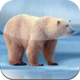 EisBaer Android App Gratis